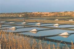 The cultivation and harvest of Celtic Sea Salt©.