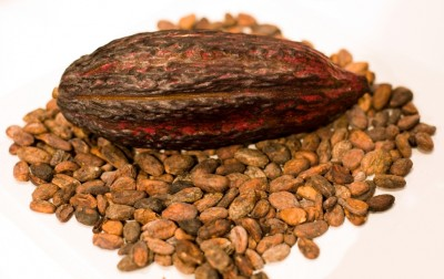 Dried cacao pod surrounded by cacao seeds